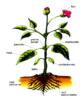 Estructura planta.png