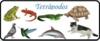 Screenshot_2018-07-19 CLASIFICACIÓN DE LOS ANIMALES SEGÚN SU DESPLAZAMIENTO.png