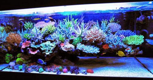 acuario marinoreef-aquarium.png