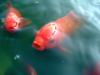 Screenshot_2019-02-21 peces-enfermos jpg (JPEG Imagen, 800 × 600 píxeles).png